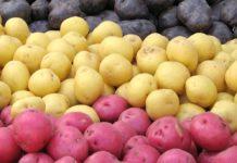 Imagem de: Como é que é? site envia 'batatas presenteáveis' para quem você ama
