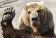 Imagem de: Vídeo: jovem grita, joga spray de pimenta em urso e acaba levando o troco
