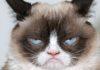 Imagem de: Pesquisa do Facebook diz que amantes de gatos são mais solitários e tristes