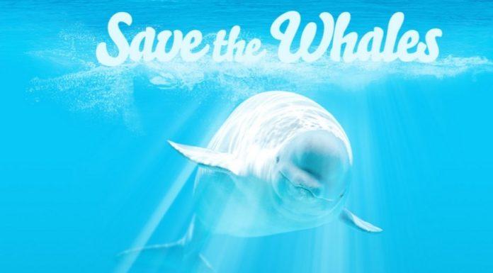 Imagem de: Quer salvar baleias? Então veja pornografia! [+18]