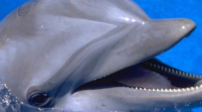 Imagem de: Acredite: usar um iPad perto de golfinhos pode ser perigoso [vídeo]