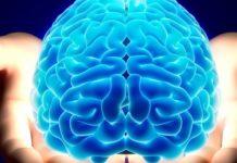 Imagem de: Cérebro humano teria capacidade para 'armazenar' a internet inteira