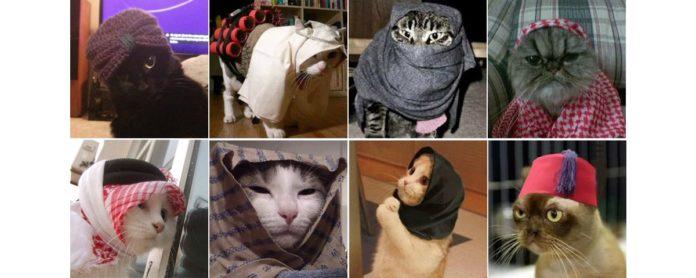 Imagem de: Internautas belgas usam memes de gatos para enfrentar o terrorismo