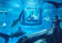 Imagem de: Airbnb anuncia quarto gratuito em aquário cercado por tubarões